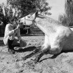 photo de profil renaud-subra-relation-homme-cheval