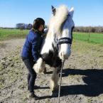 photo de profil laurine-marie-osteopathe-pour-animaux