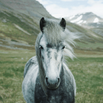 photo de profil horse-balance-shiatsu