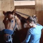photo de profil pauline-ducousso-osteopathie-animale