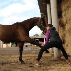 photo de profil delphine-vandecasteele-masseur-equin