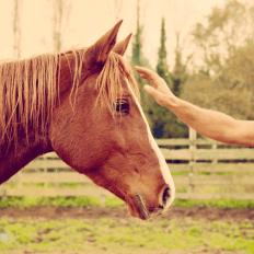 photo de profil natural-horse-coaching