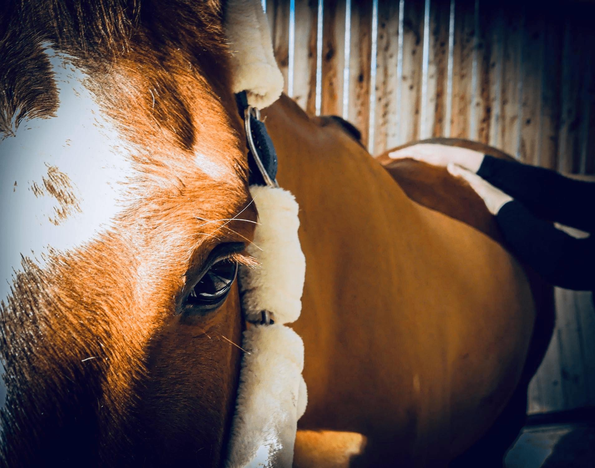 photo de couverture -KIGENN - Massage équin et canin