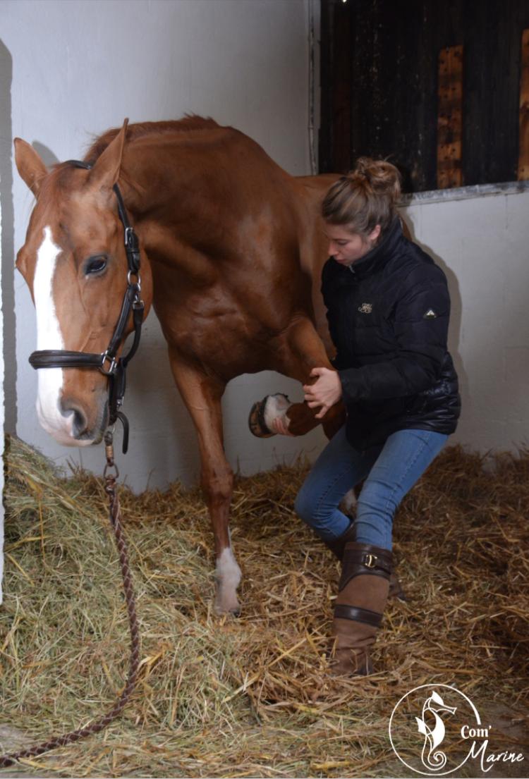 photo de couverture -Océane Le Gros - Ostéopathe animalier OA844