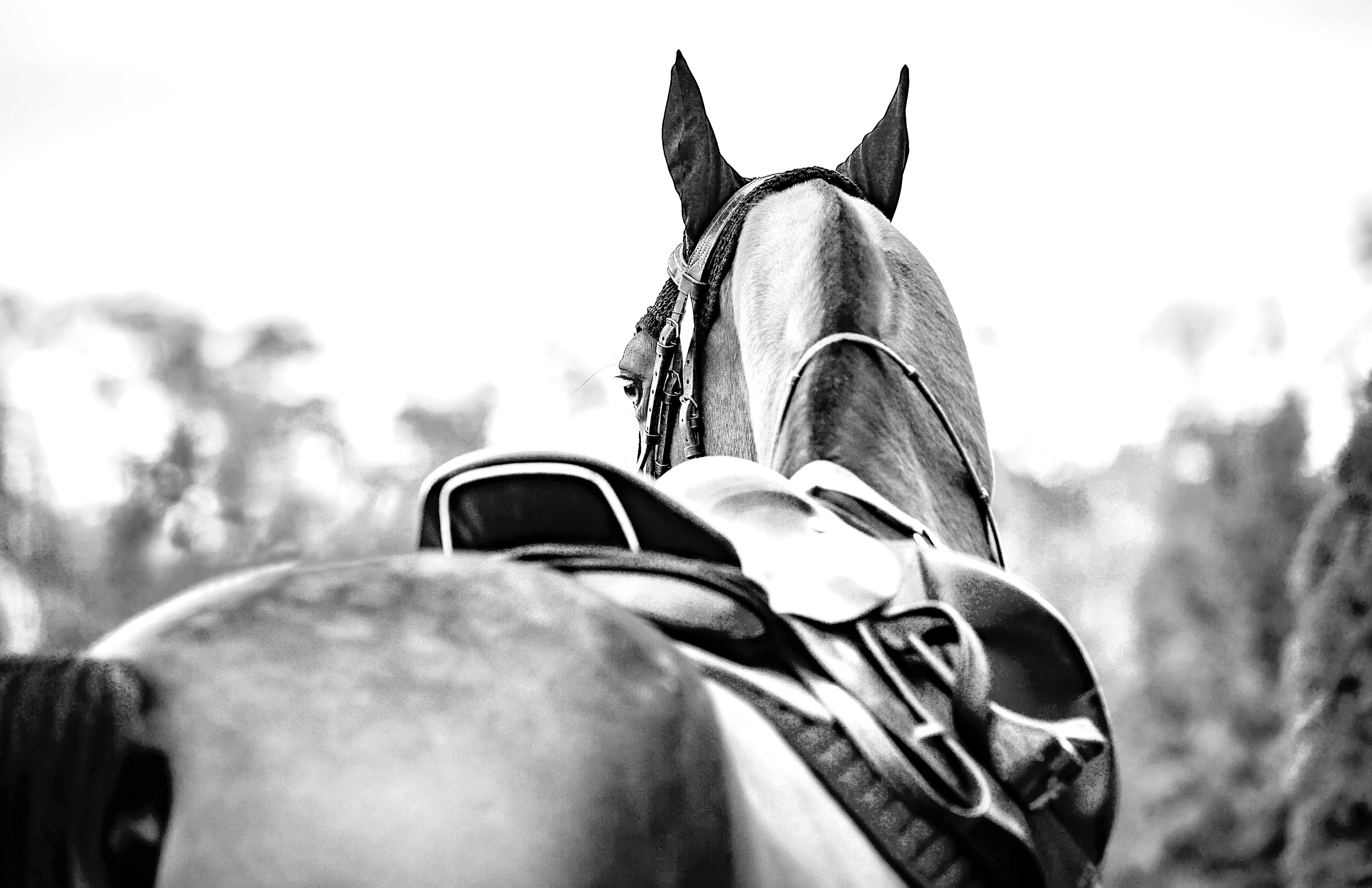 photo de couverture -EQUIN'OXE Saddle fitting - Shiatsu équin