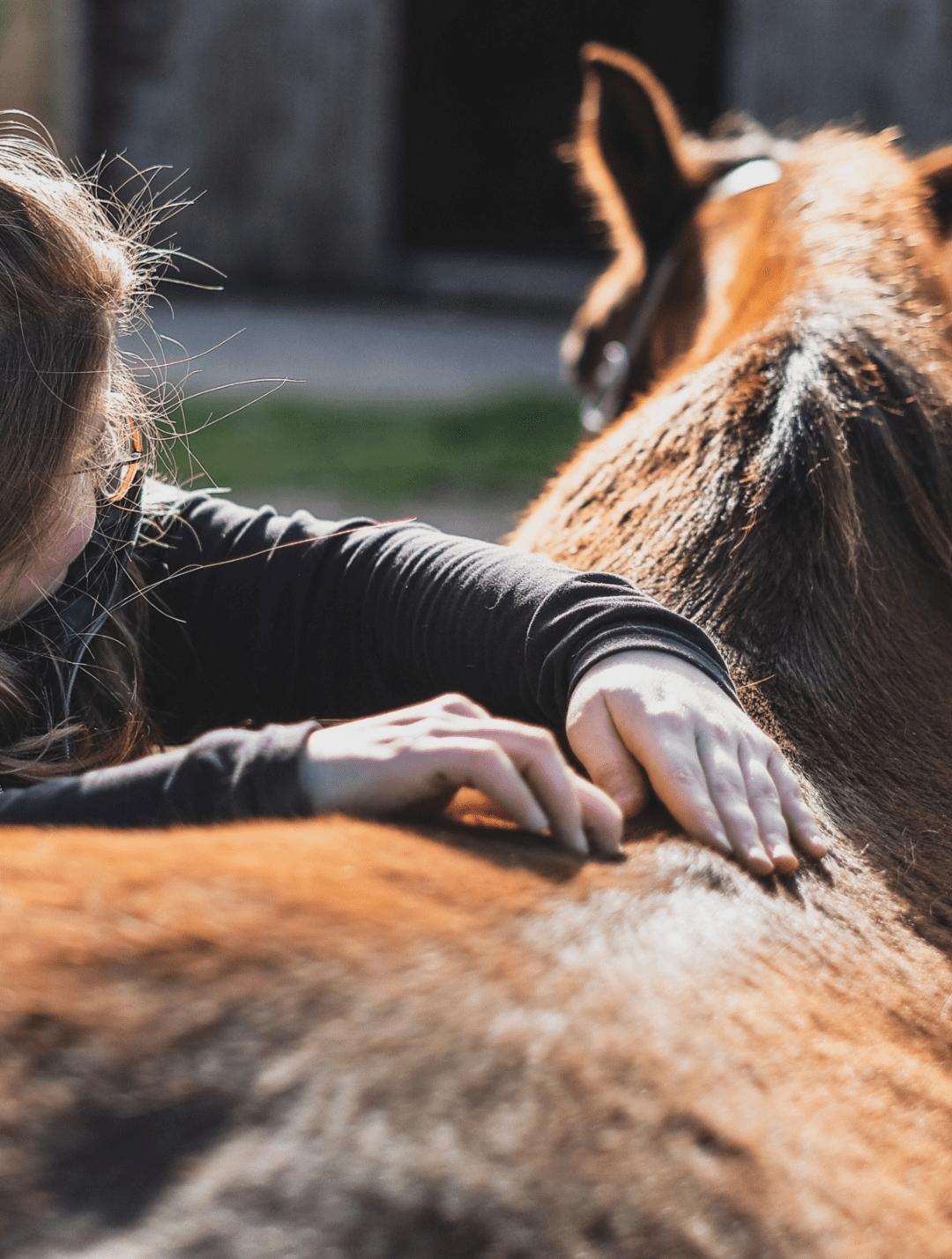 photo de couverture -Aisance Equine - Masseur équin certifié