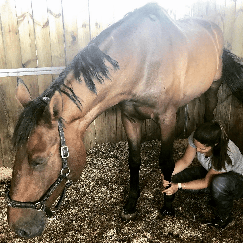 photo de couverture -HorseDog Confort - Laura Bousquet
