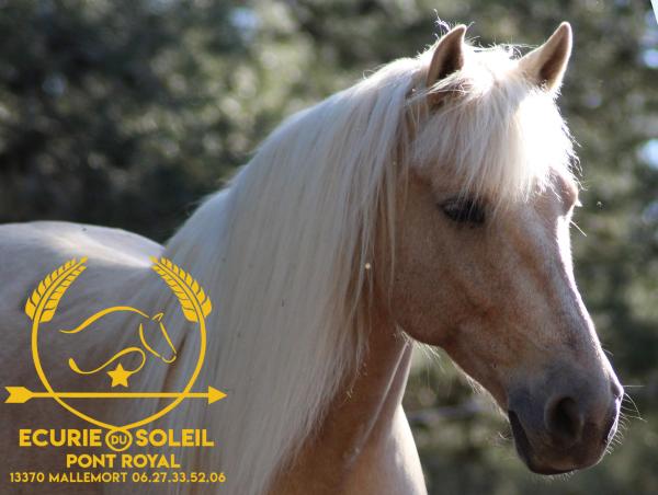 photo de couverture -Ecurie du Soleil, Centre equestre de Mallemort Pont Royal