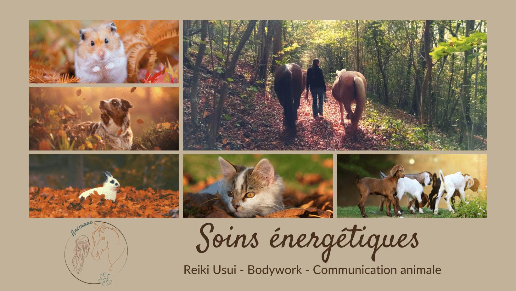 photo de couverture -HORSE & BIEN - ÊTRE