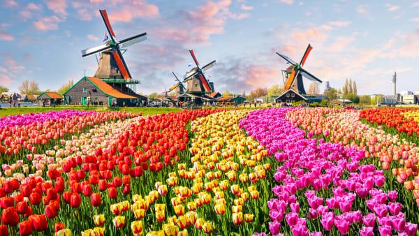 Holland 2022 Floriaden & Blomstertåget