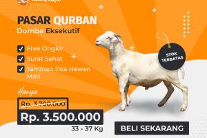 Kandang Qurban Domba Eksekutif