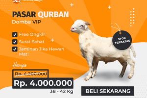 Kandang Qurban Domba VIP