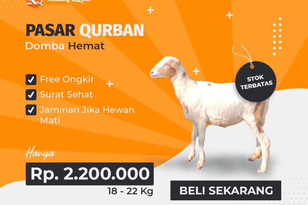 KQ-02: Kandang Qurban Domba Hemat - Kandang Qurban