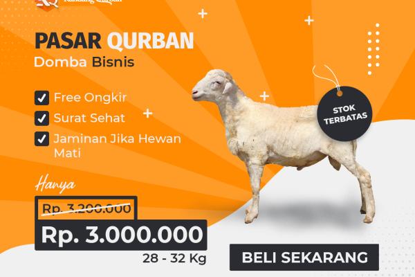 KQ-03: Kandang Qurban Domba Bisnis - Kandang Qurban