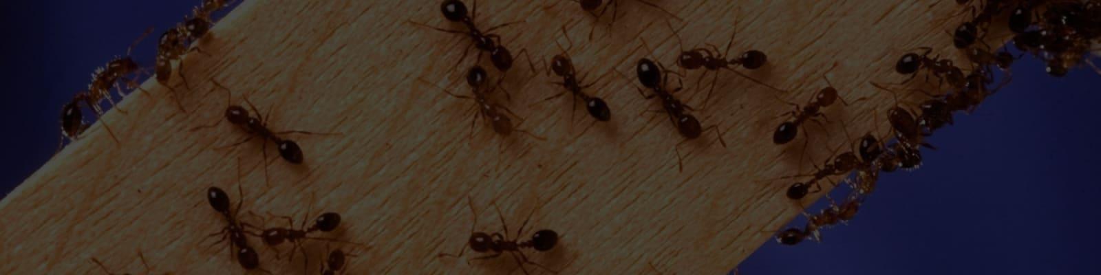 pest controls in Johannesburg