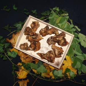 Rinderohr-Muscheln