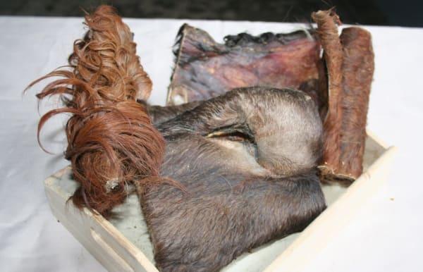 Rinderkopfhautplatten mit Fell