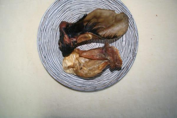 Rinderohr mit Muschel