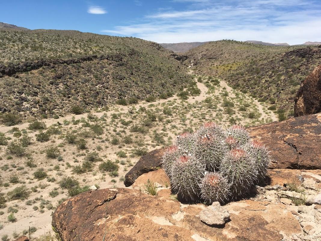 Cacti on Davenport Trail.