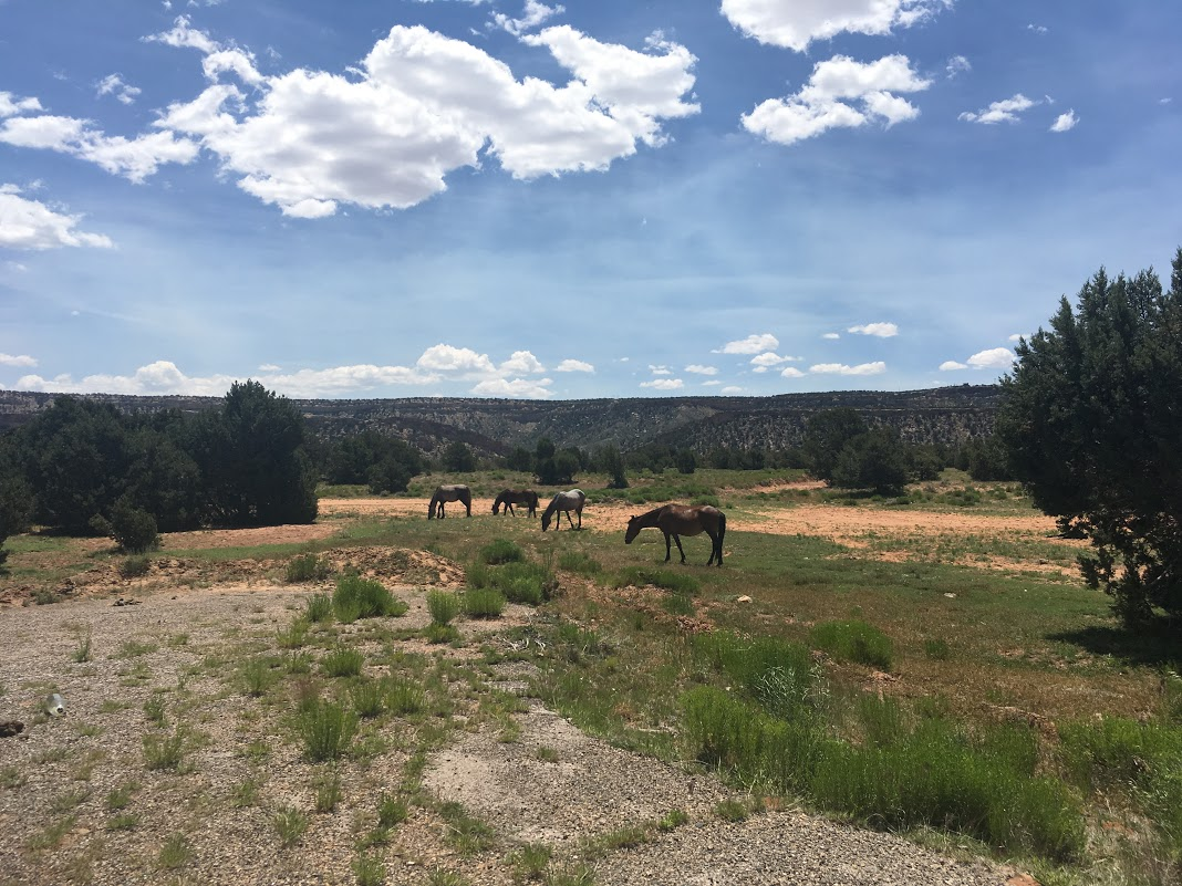 Grazing horses in Navajo territory.