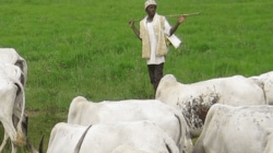 South-West Governors ban open grazing after meeting with Miyetti AllahPublished on January 25, 2021By Ifreke Inyang