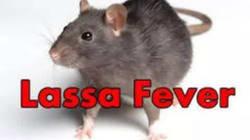 FG worried over new cases of Lassa fever