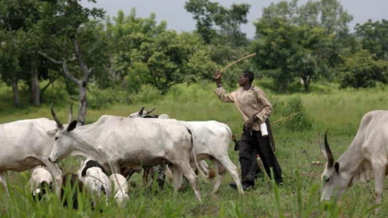 JUST IN: Open, night grazing, underage herders banned in Southwest