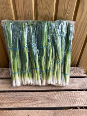 Spring Onion - Per Bunch