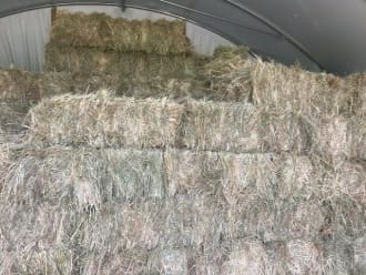 Small Baled Course Hay