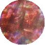 Mauve Abalone