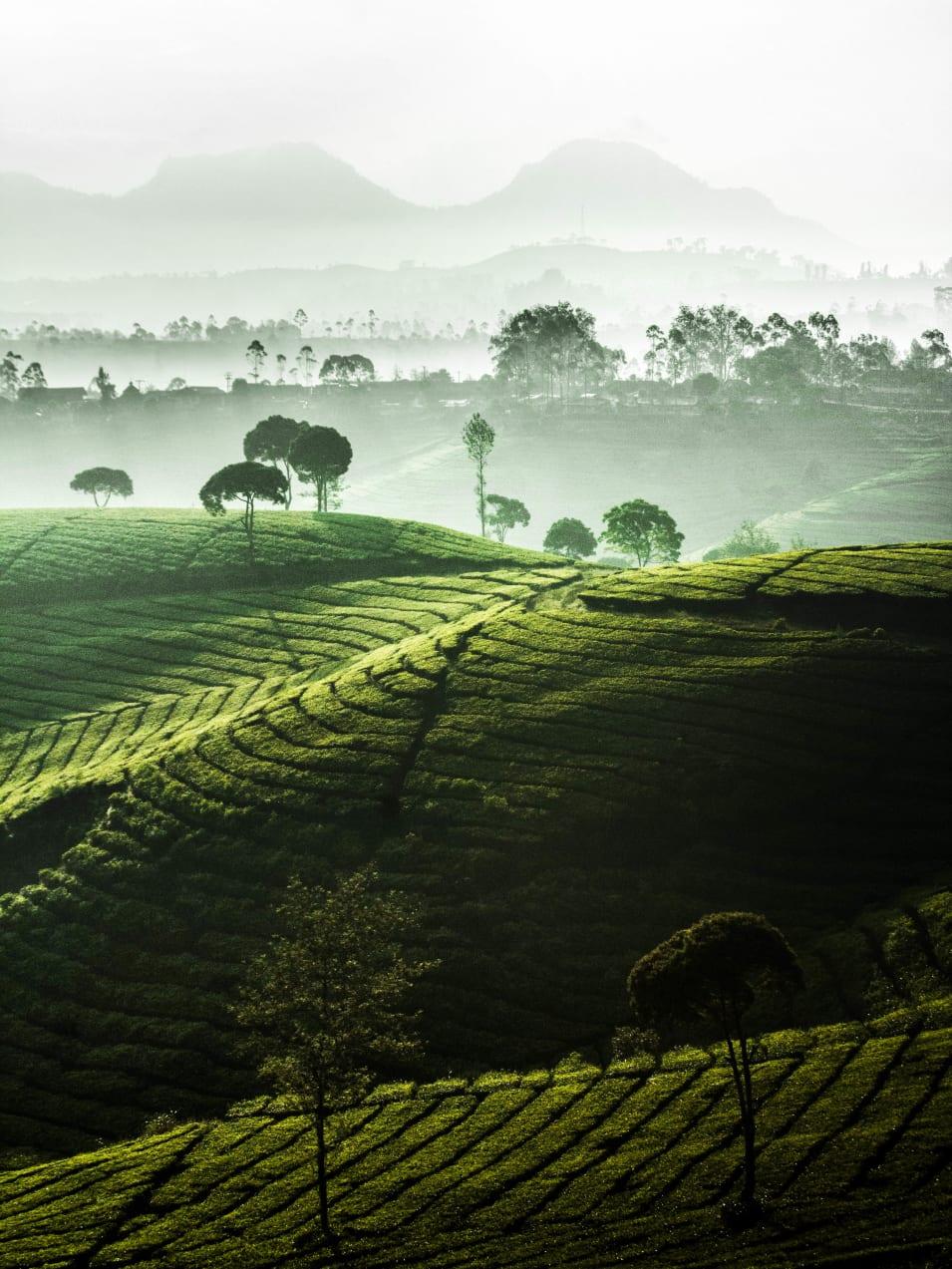 Photo by [Dwinanda Nurhanif Mujito](https://unsplash.com/photos/3vp_7D1xd2A)