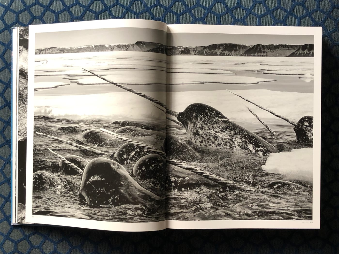 A page from 'Born to Ice' book showing Narwhals.