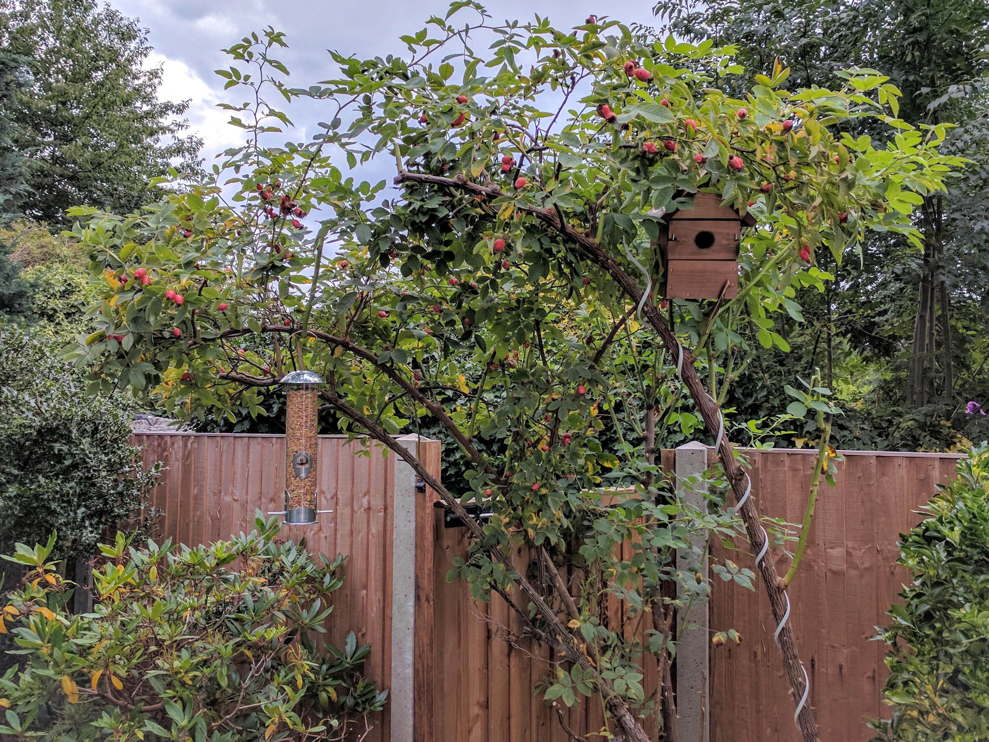 Kevin's Bird Box in situ