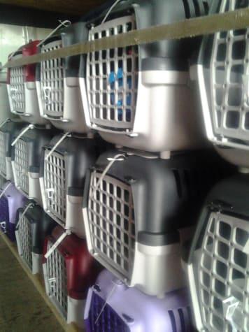 Nemzetközi gyűjtő cica szállítás