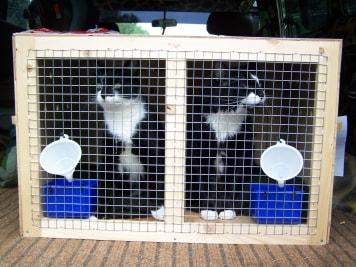 Ketrec gyártás állat költöztetéshez