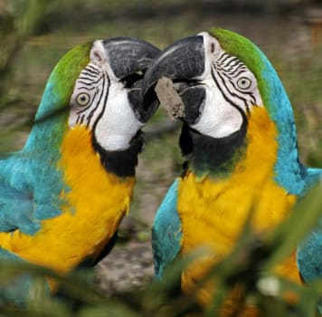 Exotikus állatszállítás, Papagáj költöztetés, Papagáj kölföldre szállítás