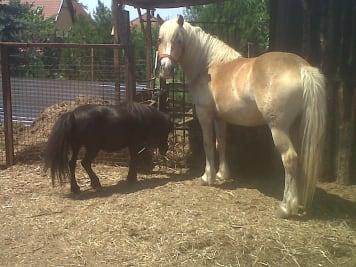 Lóvak szállítása, Ló útlevél