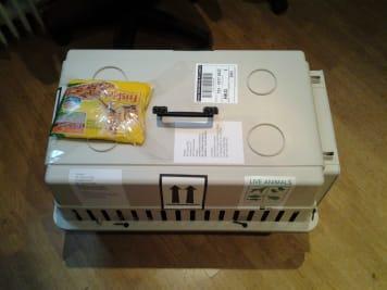 Kutya box, Cica box