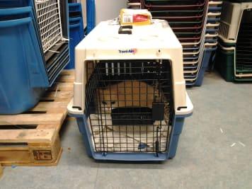 Cicák szállítása, Bíztonságos állat költöztetés