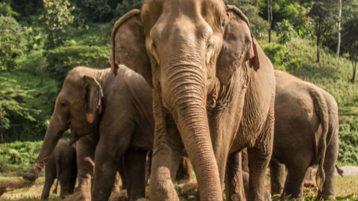 Pakej Percutian ke Chiang Mai Bersama Tripfez