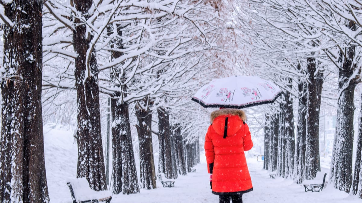 Seoul Musim Sejuk  Bersama Tripfez
