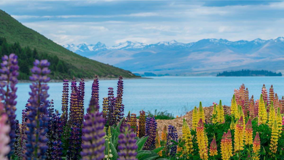 Percutian Dramatis Pulau Selatan New Zealand Bersama Tripfez