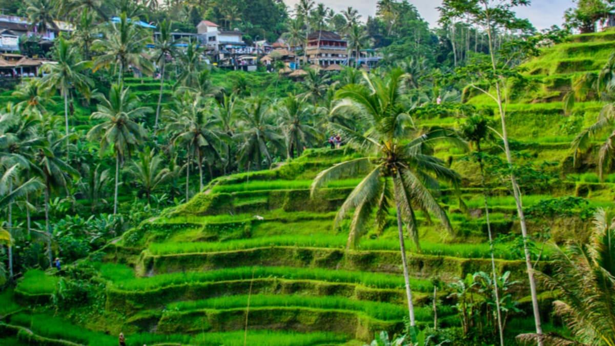 Bali Super Saver With Tripfez