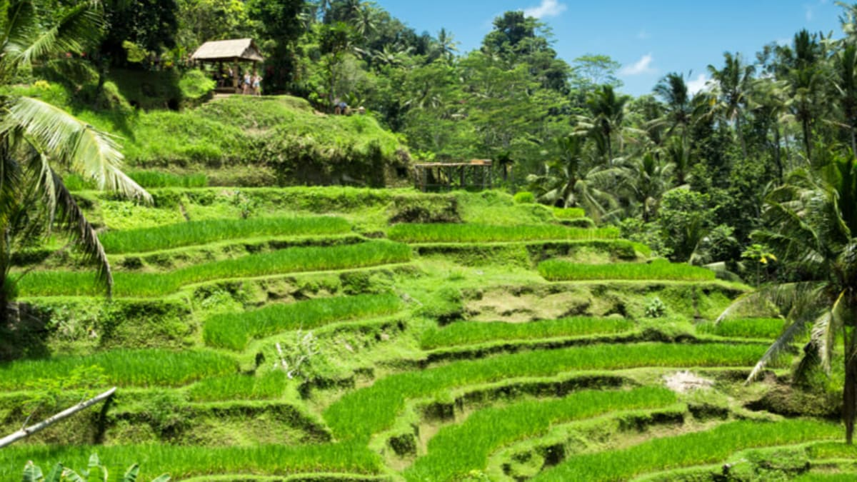 Keajaiban Bali Bersama Tripfez