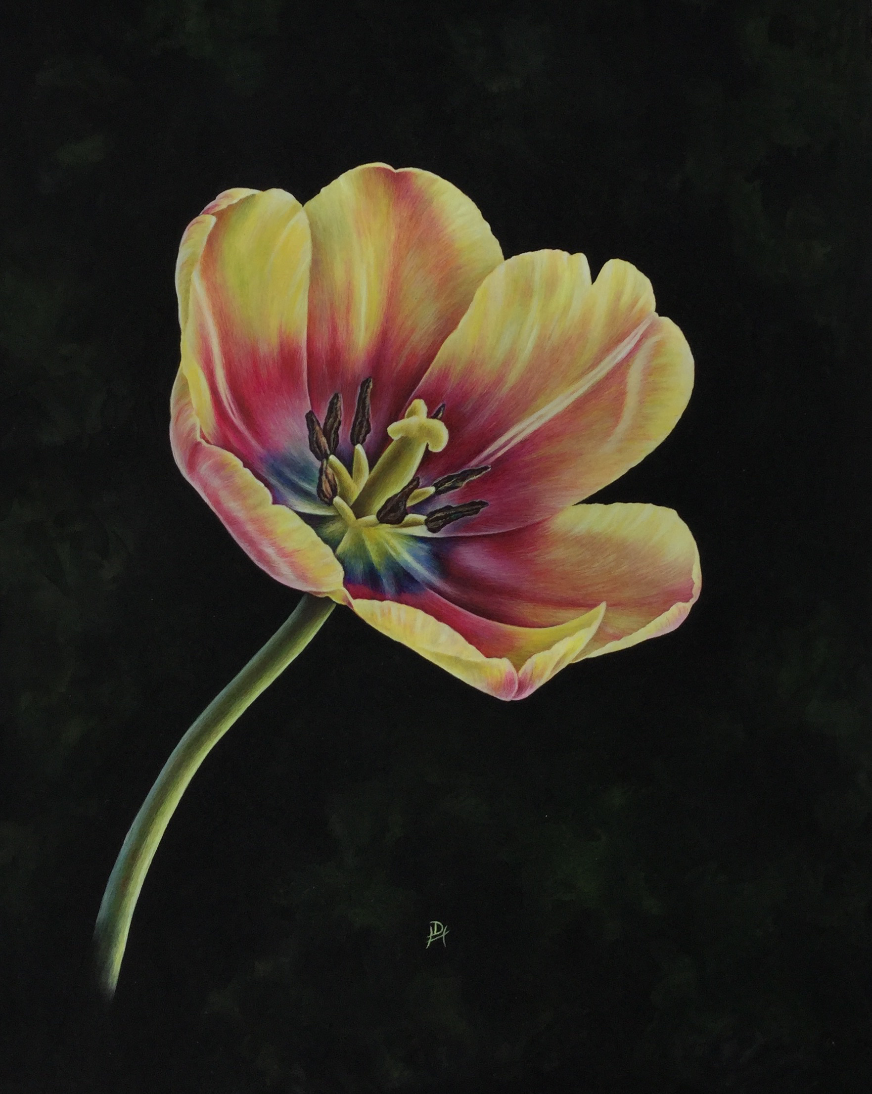Apricot Foxx Tulip