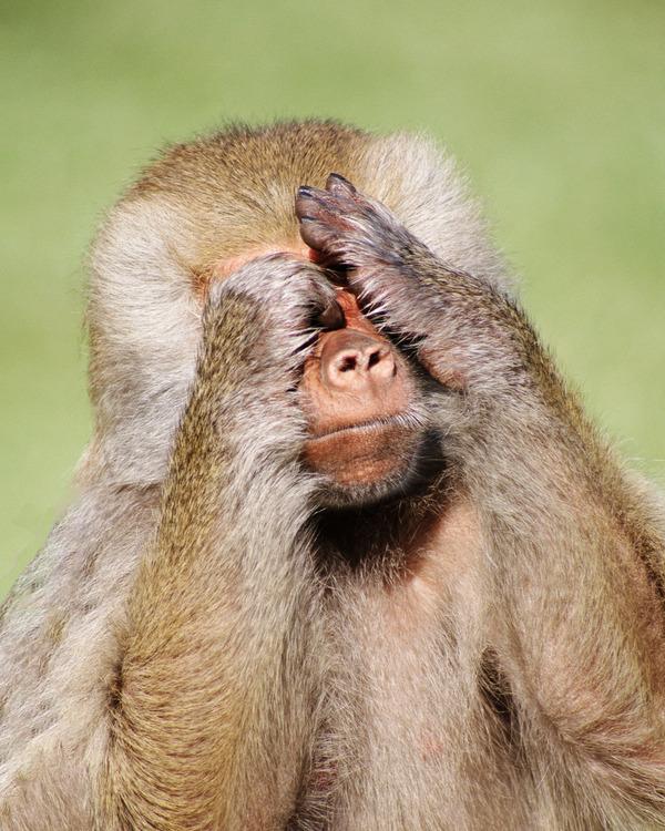 znamenitye-zooparki-mira-predlagayut-onlain-posesheniya