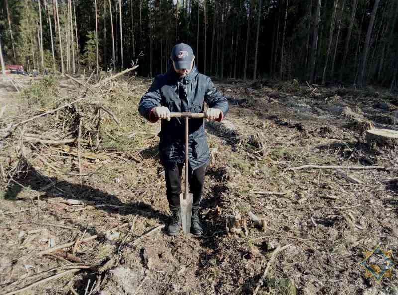 nedelya-lesa-v-bobruiskom-lesnichestve-itogi-akcii-1