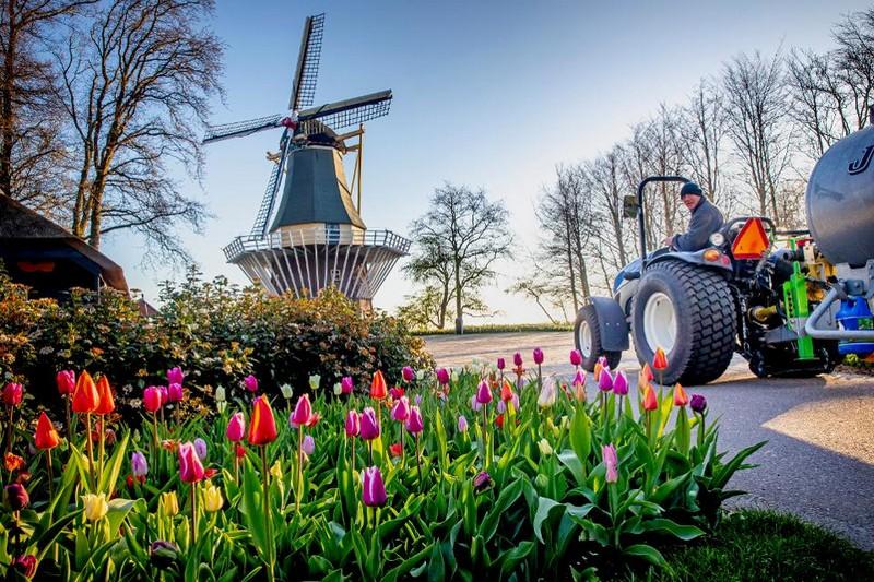 sotrudniki-parka-v-niderlandakh-podgotovili-dlya-lyubitelei-cvetov-virtualnuyu-ekskursiyu-2