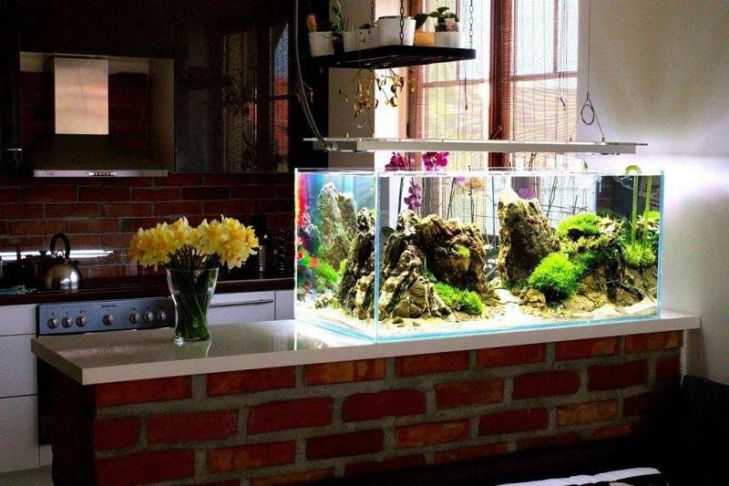 akvarium-v-dome-soderzhanie-i-ukhod-1
