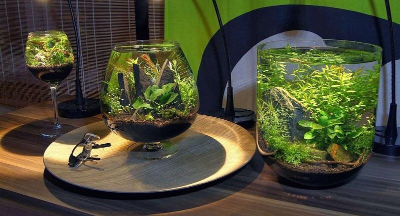 akvarium-v-dome-soderzhanie-i-ukhod-2